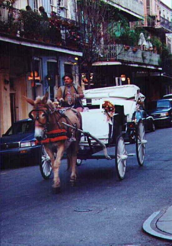 Esel im French Quarter